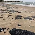 manchas de óleo em praia da Paraíba