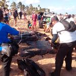 Diante da inação do governo, população limpa praias do Nordeste
