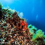 Você sabia que existem enormes montanhas no fundo do mar?