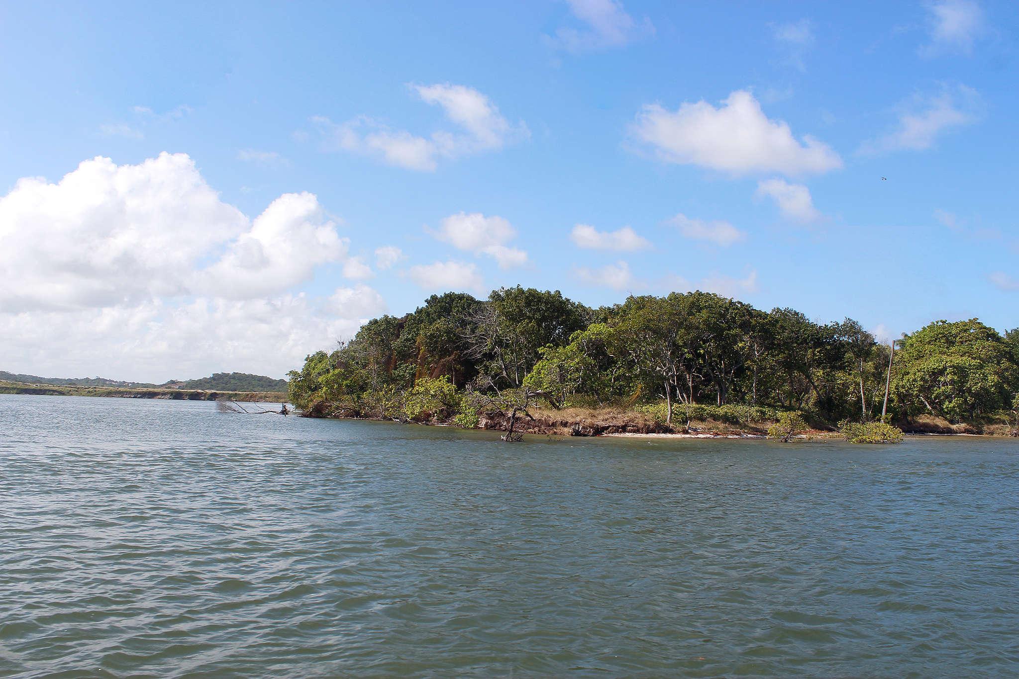 Mangue em Suape, região de muitos pescadores e marisqueiras, que estão sendo impactados pelas manchas de óleo que chegam ao Nordeste.