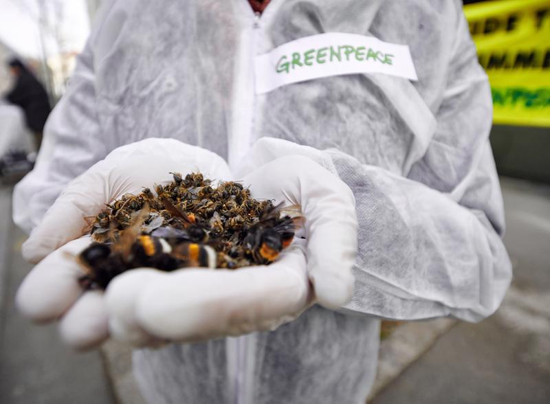 ativista segura várias abelhas mortas na mão
