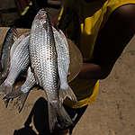 Pescadores estão desistindo de pescar pela falta de compradores