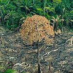 Desmatamento da Amazônia é o maior desde 2008