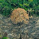 """Grilagem e desmatamento encontram """"espaço"""" para avançar em áreas protegidas"""