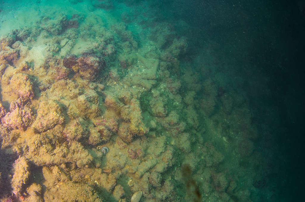 Corais da espécie Mussismilia harttii mortos no fundo do mar, em região próxima a Maracaípe, litoral sul de Pernambuco. © Max Cavalcanti / Greenpeace