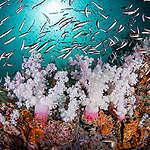 A crise climática é reflexo do que acontece com os oceanos, diz relatório