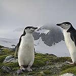 De volta à Antártida – Os últimos passos para o Tratado Global dos Oceanos