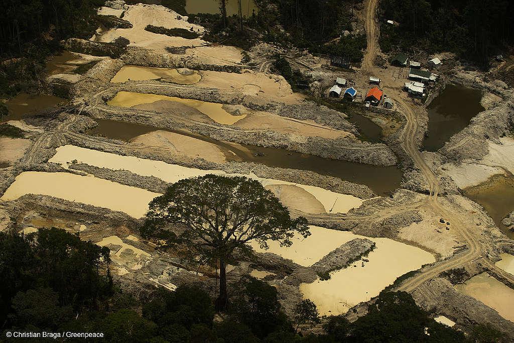 Fotos mostram floresta destruída pelo garimpo, com lama por toda a parte, máquinas trabalhando, rio poluído e árvores destruídas.