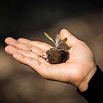 mão segura uma muda de planta