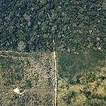 Desmatamento em terras indígenas aumenta 64% nos primeiros meses de 2020