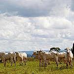 PL da Invasão ameaça Terras Indígenas em Mato Grosso