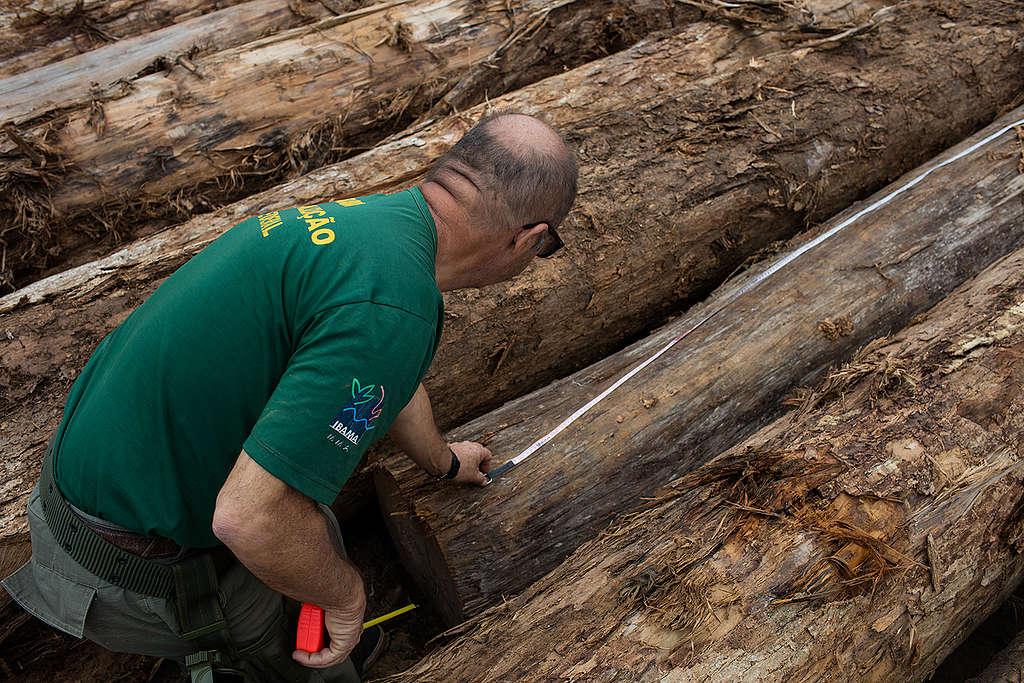 fiscal inspeciona madeira