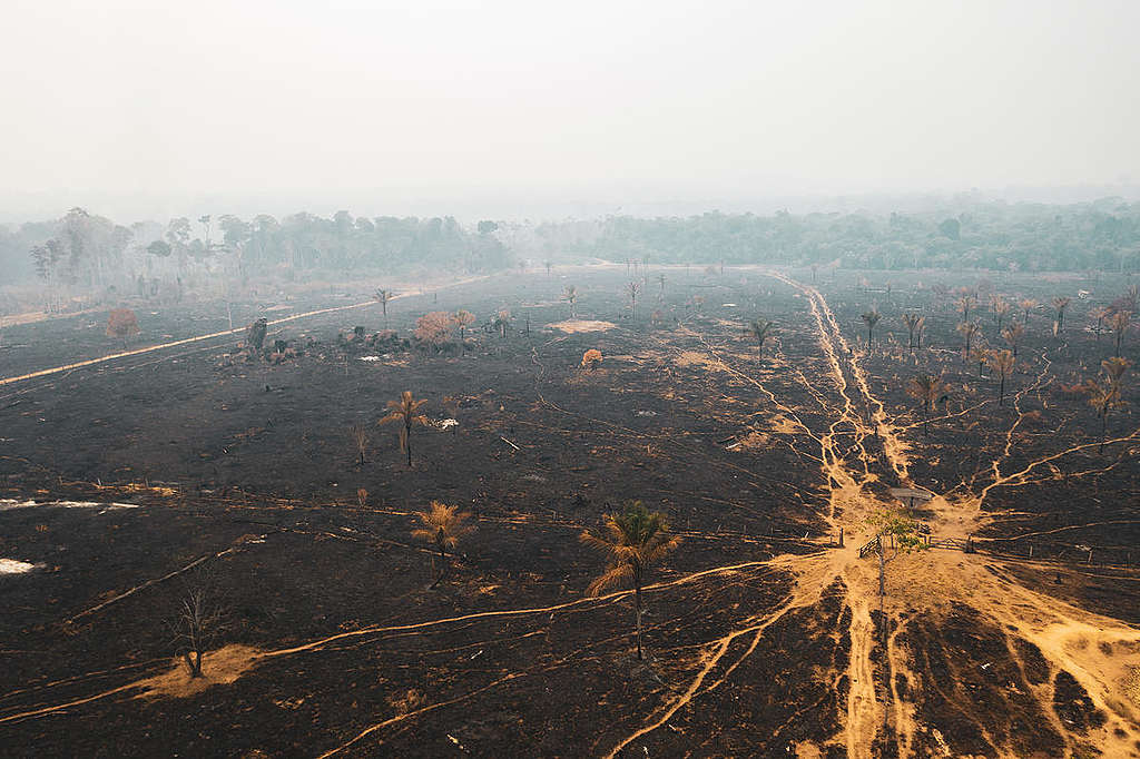 Forest Fires in the Amazon, Rondônia state, Brazil, (2019). © Fernanda Ligabue / Greenpeace