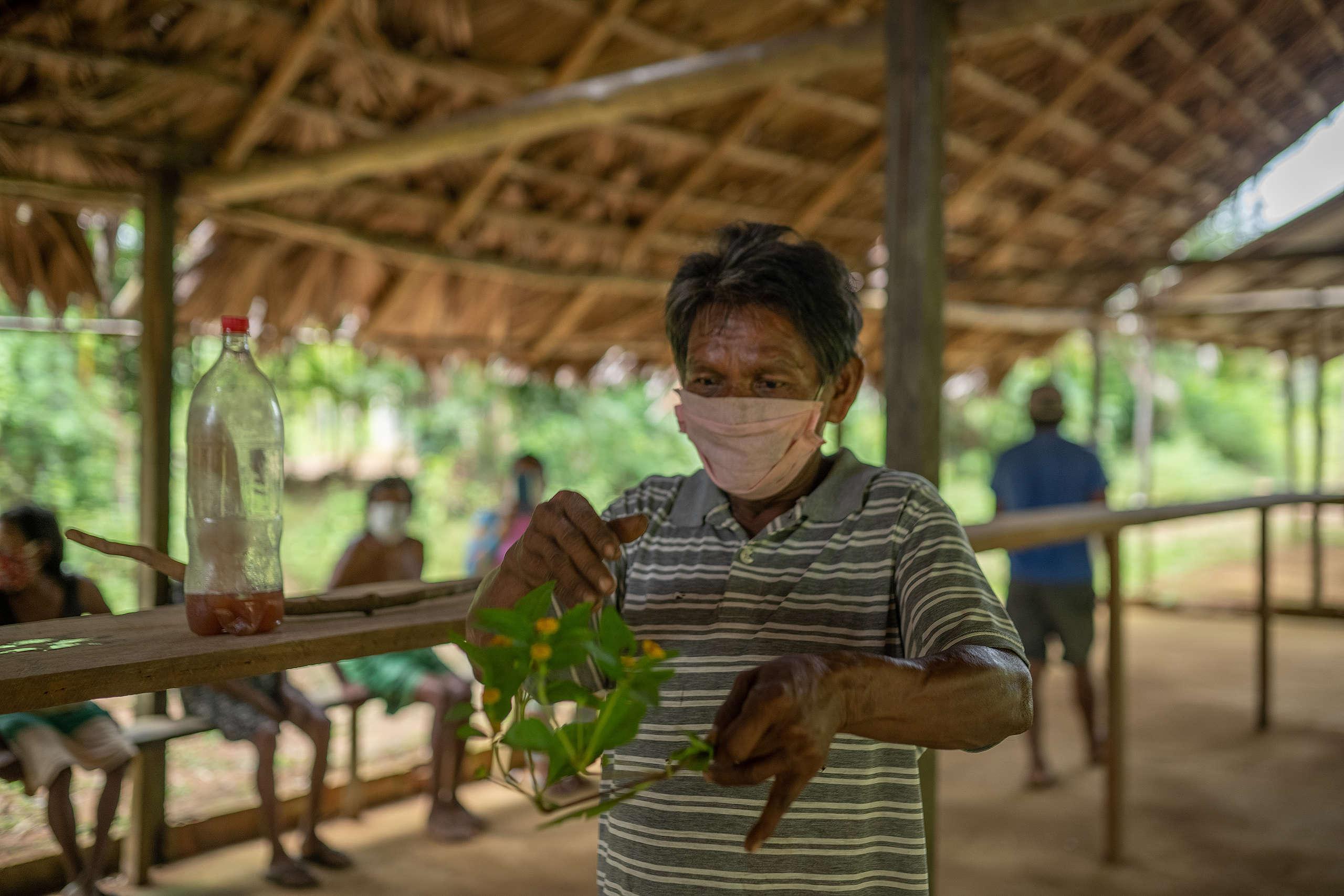 Jair mostra plantas e o chá utilizado por eles para se recuperar da Covid-19 © Christian Braga / Greenpeace