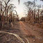 Comunidades lutam para sobreviver após incêndios no Pantanal