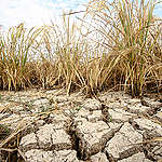 El Niño Drought in the Philippines. © Karlos Manlupig / Greenpeace