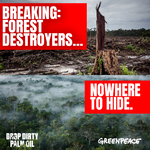 Forest-destroying palm oil companies nowhere to hide.