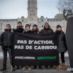 Devant le Parlement du Québec, Greenpeace dénonce l'incapacité du ministre Blanchette à protéger le caribou