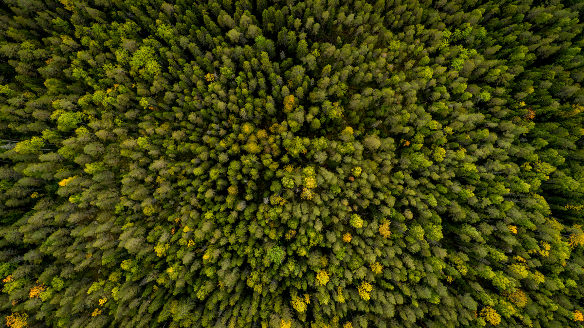 Forest West of Stor-Gravberget in Sweden