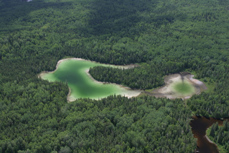 Kenogami Forest Documentation in Ontario, Canada
