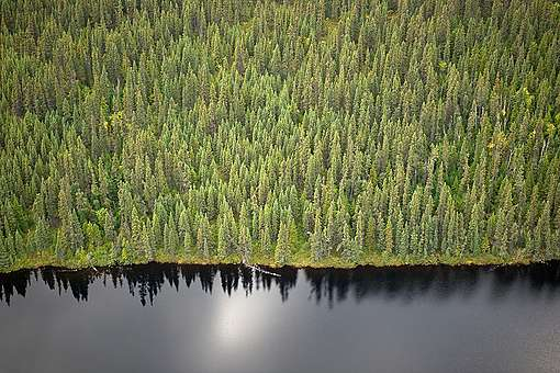 Boreal Forest - Montagnes Blanches, Quebec