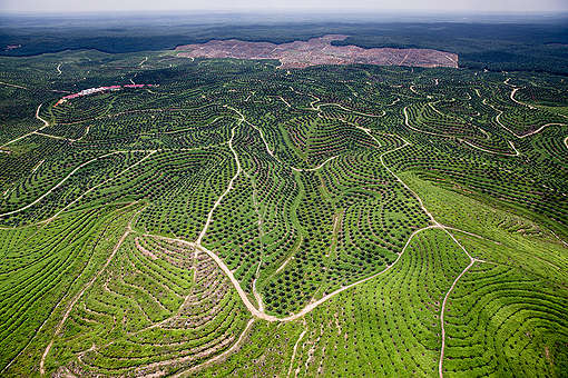 Palm Oil Plantation in Riau. © Kemal Jufri