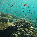Récif corallien foisonnant de vie, dans la mer d'Andaman, en Thaïlande.