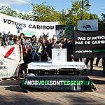 Votons CARIBOU