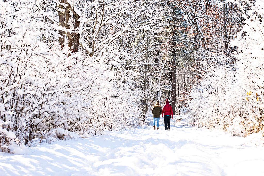 Premiere neige. ©Creative Common - Mark Bonica
