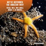 Victory Amazon Reef starfish