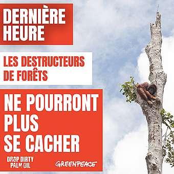 Huile de palme - les destructeurs de forêts ne pourront plus se cacher
