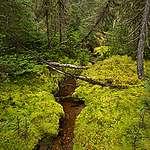 La forêt ne connaît pas de frontière…