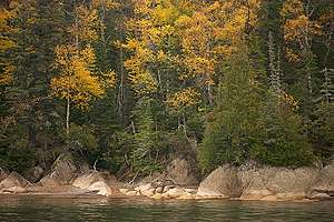 Boreal Forest on Slate Island in Ontario. © Markus Mauthe