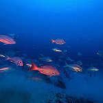 Amazon Reef in French Guiana Waters. © Greenpeace