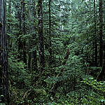Temperate forest. British Columbia, Canada. © Greenpeace / Takeshi Mizukoshi