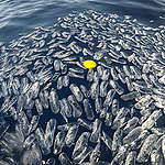 Floating Plastic Waste off Capraia Island. © Francesco Alesi / Greenpeace