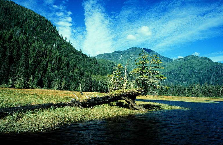 Mouth of Lockhart/Gordon Creek. © Greenpeace / Phil Aikman