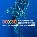 Thumbnail 30X30 Blueprint Ocean Protection