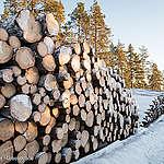 RÉACTION: Le ministère des Forêts ouvre la porte à l'industrie dans l'une des dernières forêts anciennes au sud du Québec, dit Greenpeace