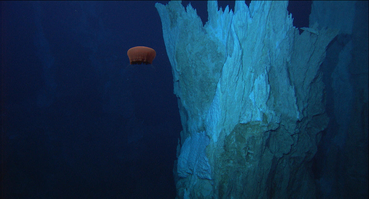 Vent Field in the Lost City, Atlantic Ocean. © NOAA/IFE/UW/URI-IAO