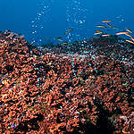 Hydrothermal Vents - Deep Sea Life in the Azores. © Greenpeace / Gavin Newman