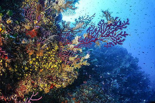 Sardinia, Marine Protected Area of Island of Tavolara - Secca Papa. © Egidio Trainito / Greenpeace