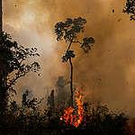 Amazonie en proie aux flammes