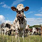 Cows in a Field in France. © Emile Loreaux / Greenpeace