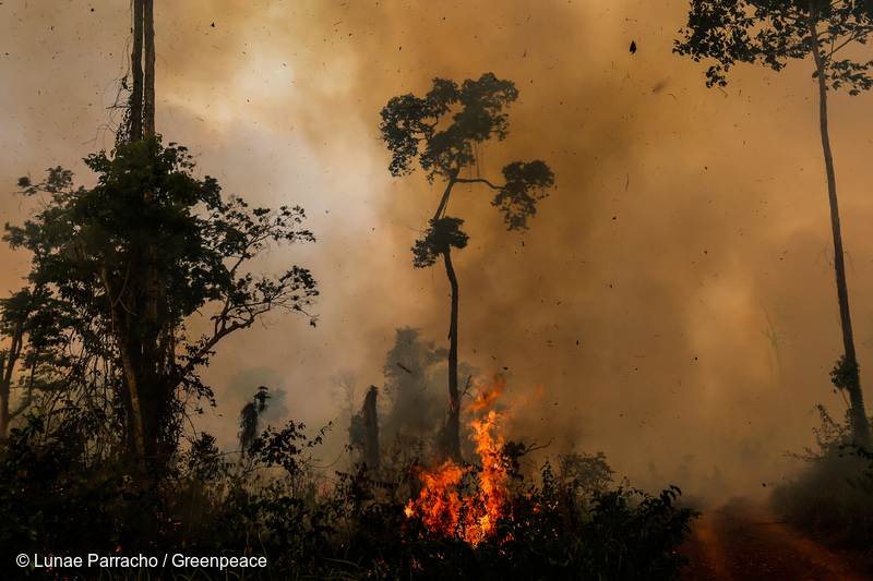 Amazon in Flames - Greenpeace Canada