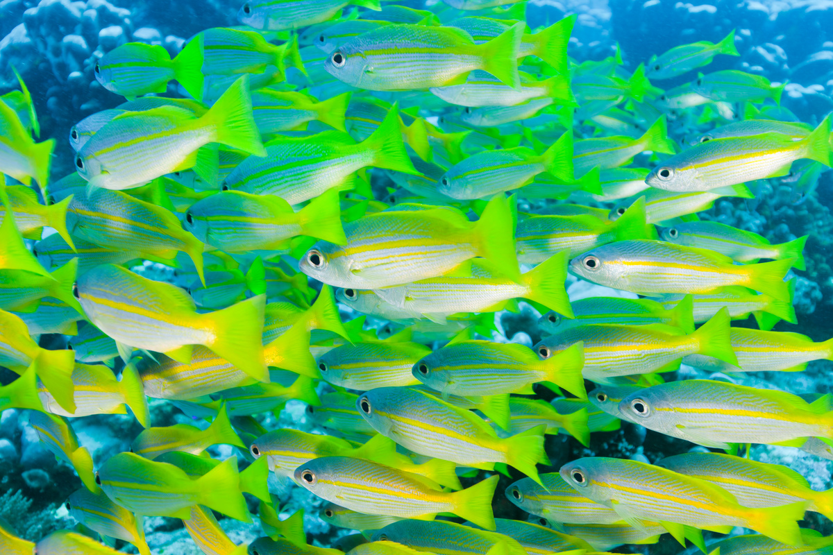 Schools of Fish in Raja Ampat in Papua. © Paul Hilton / Greenpeace