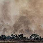Forest Fires in Alta Floresta, Mato Grosso, Amazon (2019). © Victor Moriyama / Greenpeace