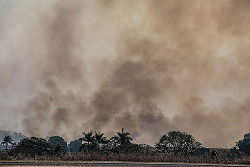 Forest Fires in Alta Floresta, Mato Grosso, Amazon (2019). © Victor Moriyama / Greenpeace