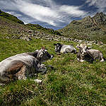 Climate Change Impact Austria - Alpine pastures. © Mitja  Kobal / Greenpeace