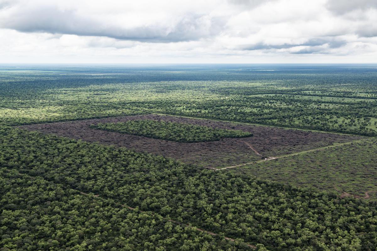 Illegal Deforestation in North Argentina. © Martin Katz / Greenpeace